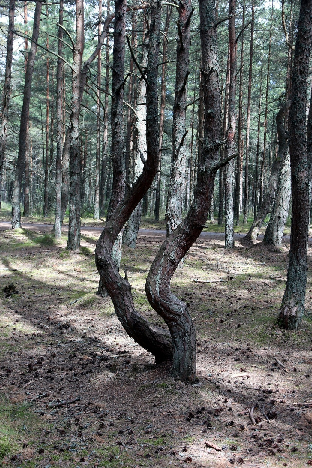 forest-3398992_1920
