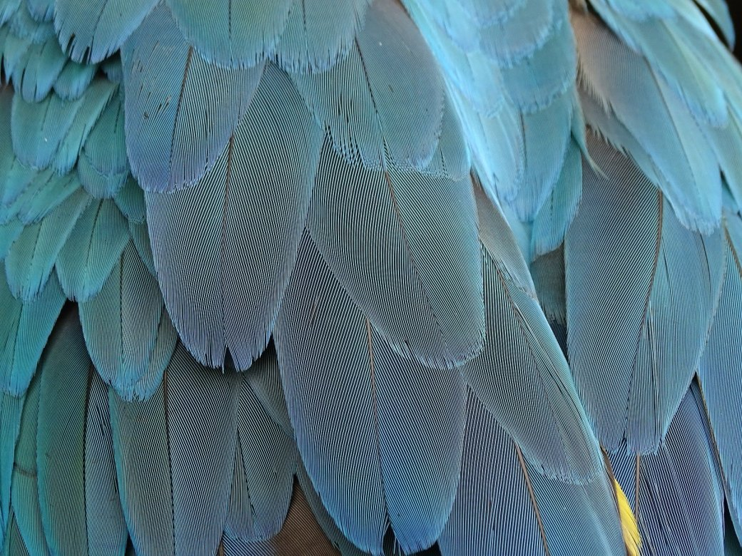 feather-1952382_1920