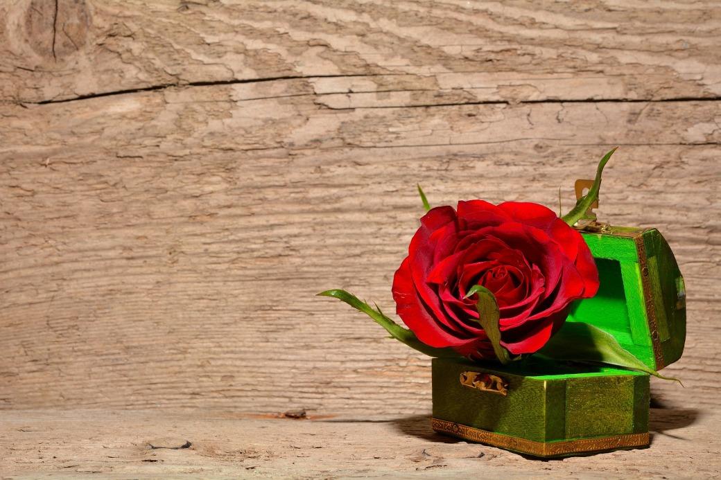 rose-557692_1920