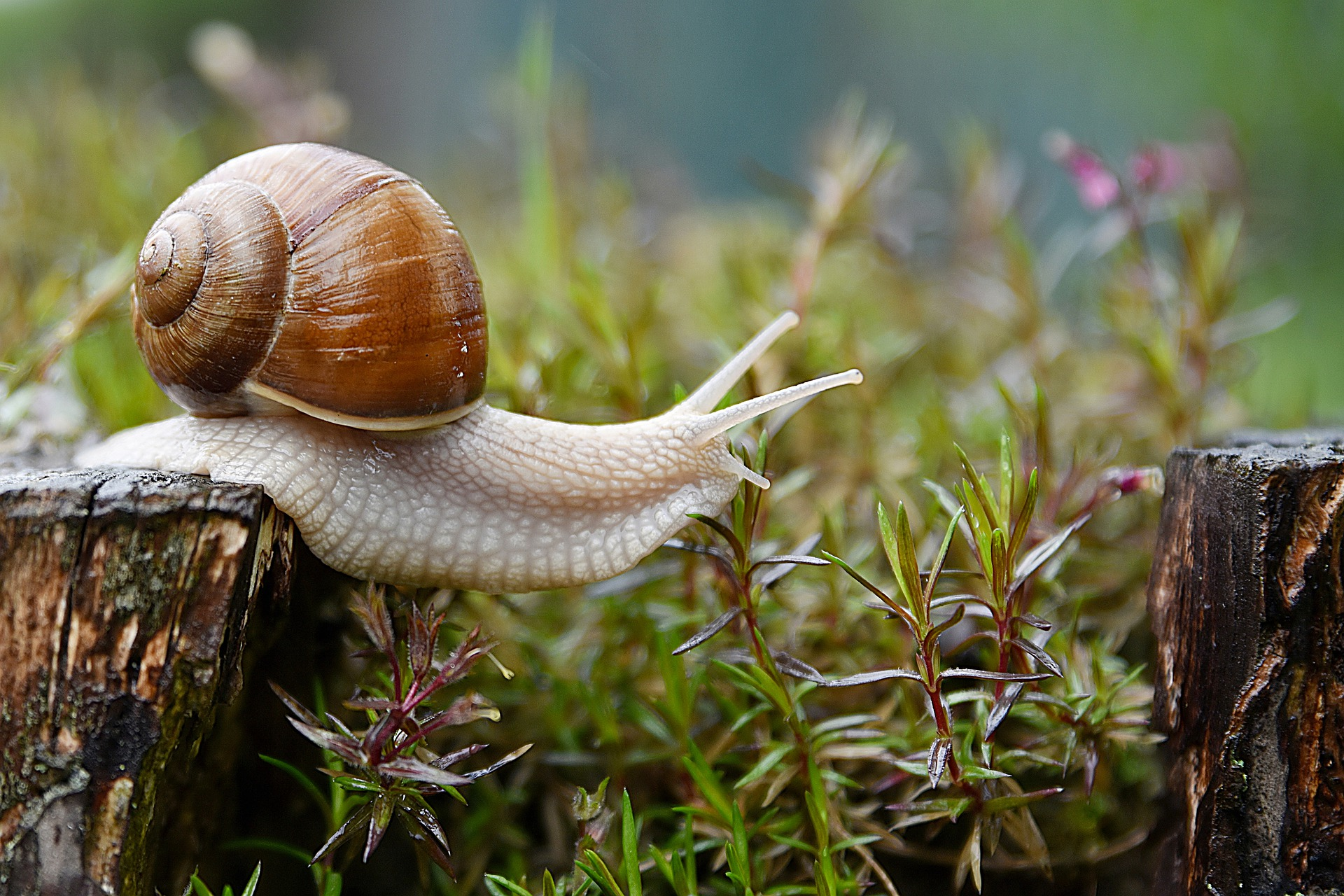 snail-4729777_1920