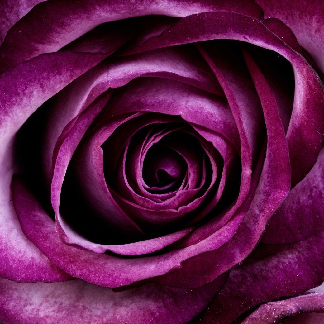 flower-66809_1920