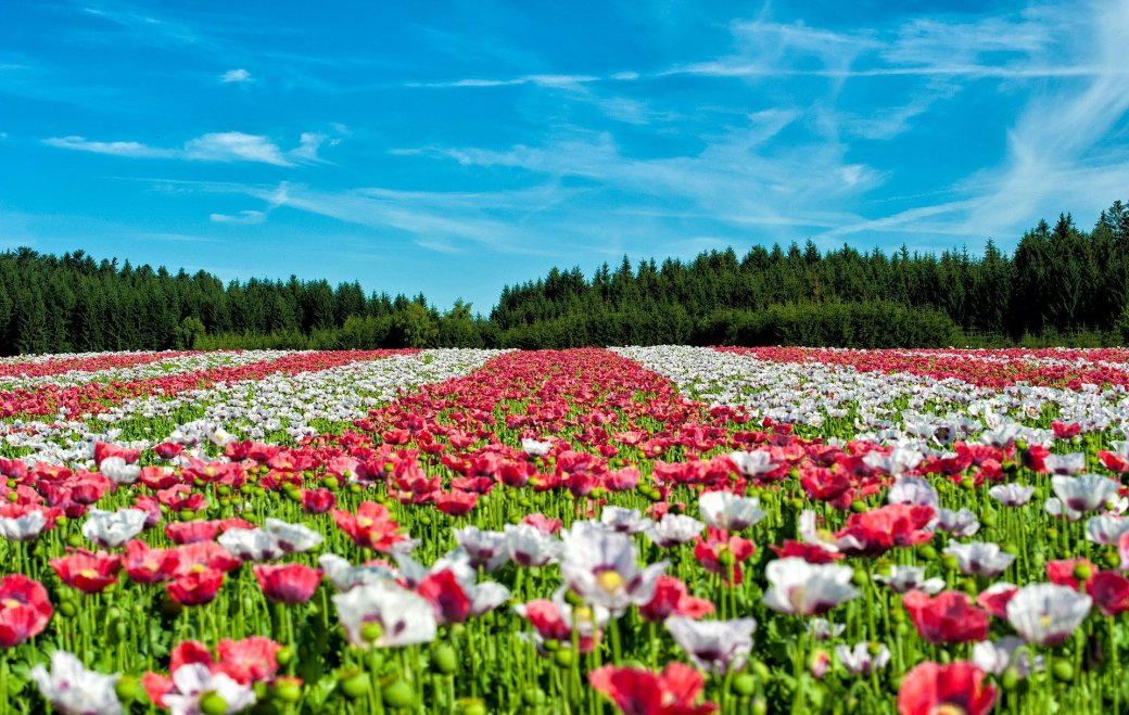 flowers-63755_1920
