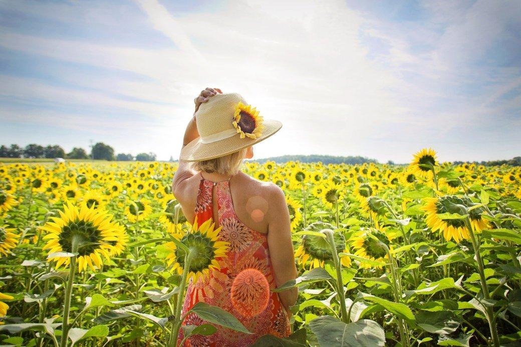 sunflowers-3640935_1920